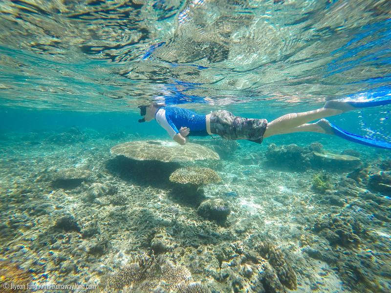 Flores Island snorkeling