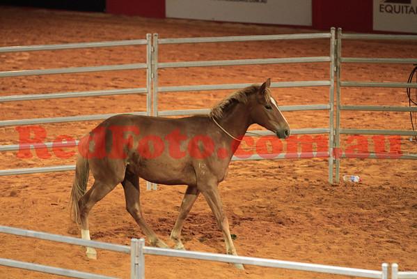 2011 11 10 Equitana_Way_of_the_Horse