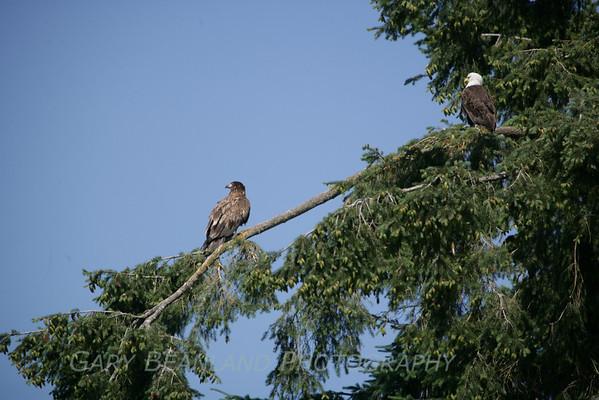 Davis's Eagle Brunch June 27, 2009