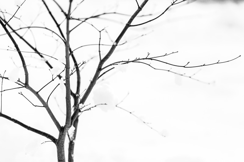 ALoraePhotography_SeniorNight_20190209_30037.jpg