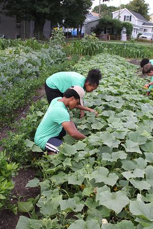 8-9-17 community garden Ingalls school