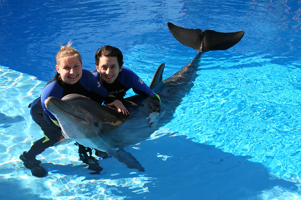 Dolphin Trainer for a Day