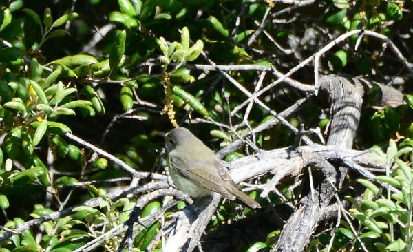 Santa Ysabel with SD Audubon - 4/13/14