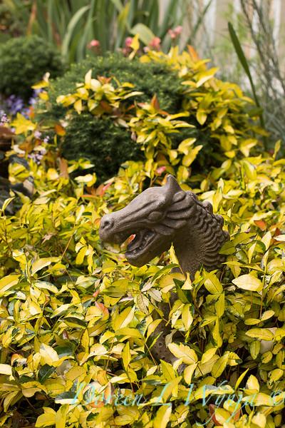 Trachelospermum asiaticum 'Torafu' - dragon art_1348.jpg