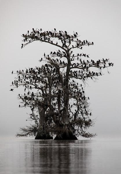 Cypress_Swamps_1117_PSokol-2793-Edit.jpg