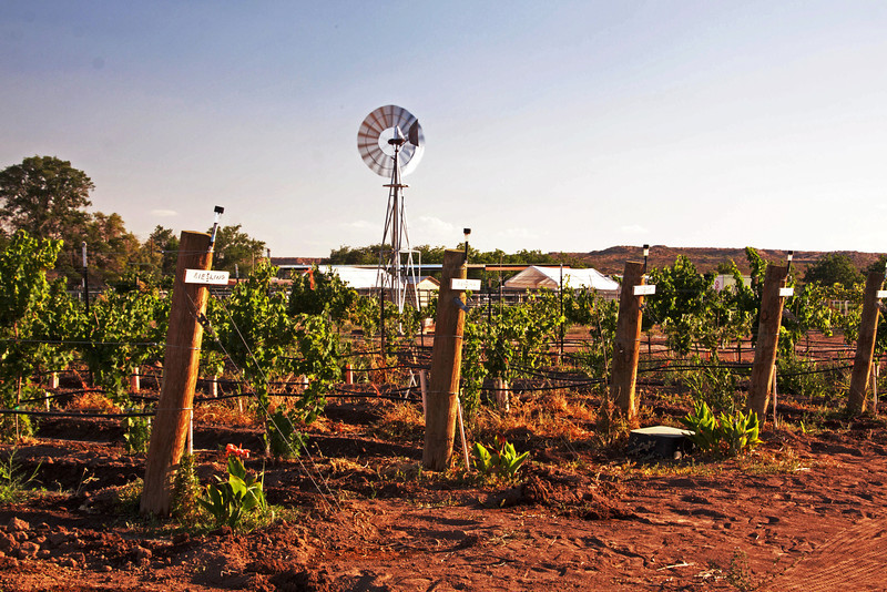 IMG_5498 vineyard & windmill 3.jpg