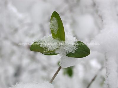 016-botanical-nlg-07apr03-4334