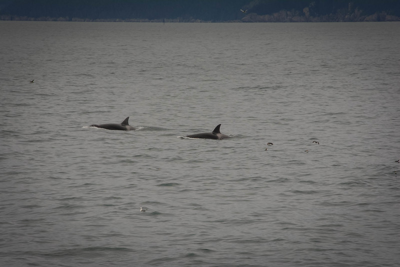 Kenai-Fjords-184.jpg