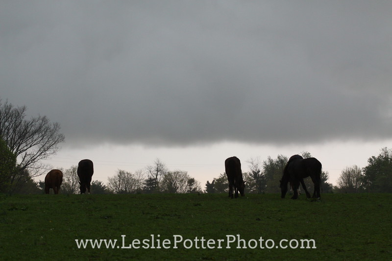 Horses in Pasture Under Storm Clouds