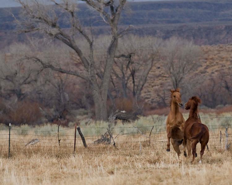 2 Horses 0512.jpg
