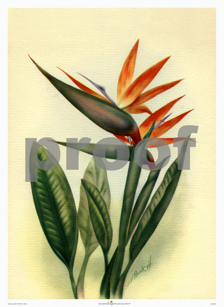 126: 'Bird of Paradise' by Ted Mundorff. (PROOF watermark will not appear on your print)