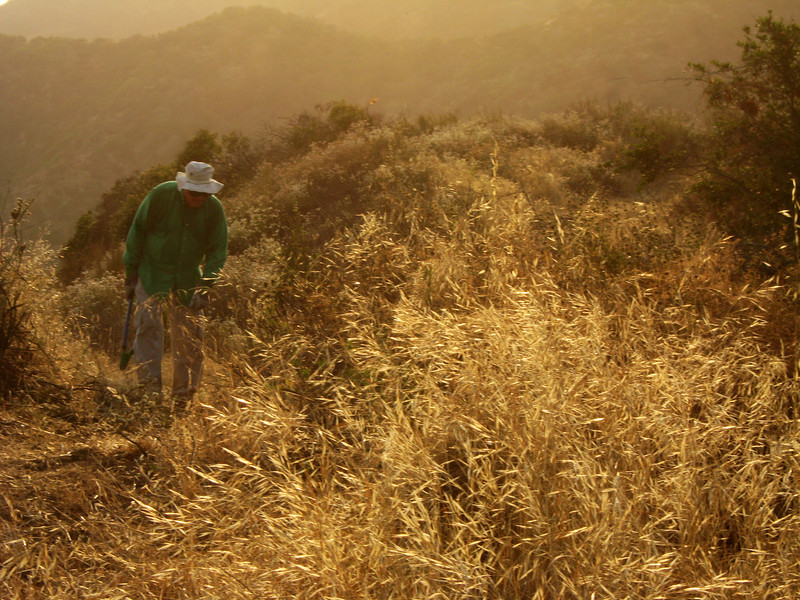 20080625009-Glendale Las Flores Trailwork.JPG