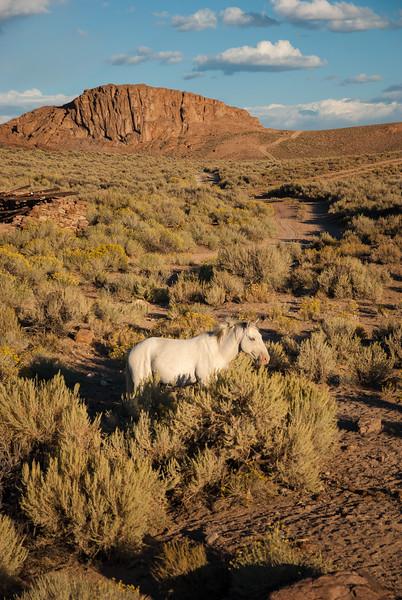 White Wild Horse Near Rt 6 #2