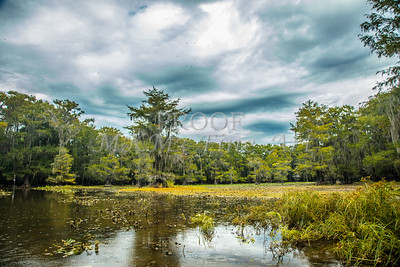Caddo Lake In Color Gp2
