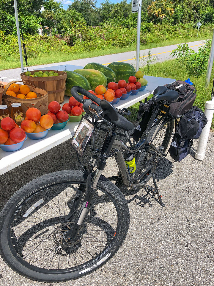 Trek Sky at produce stand Mims