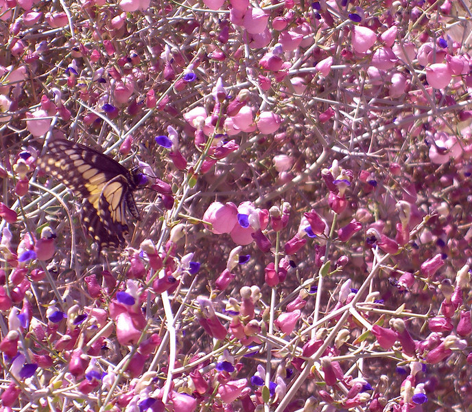 butterfly on paper bag bush