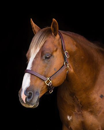 Various Horses