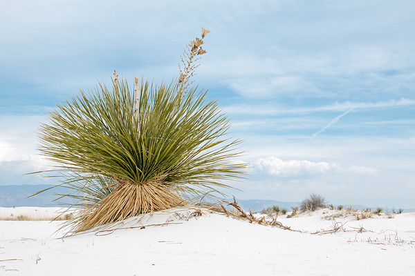 White Sands National Monument / New Mexico