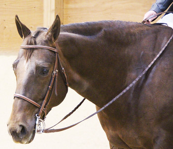 Equine Portraits and Candids