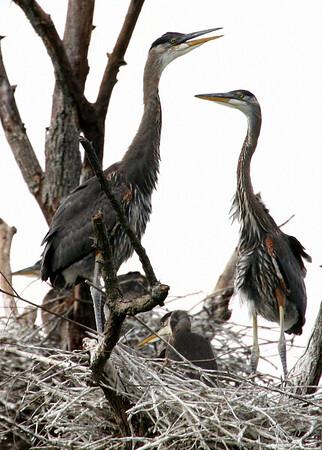 Creek Bend Heron Rookery