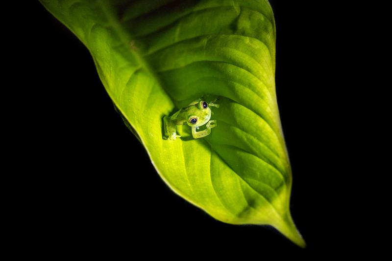 Little green frog sitting on a big leaf