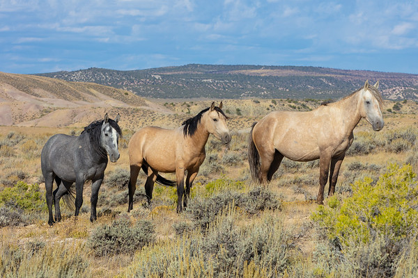 Sand Wash Basin Horses