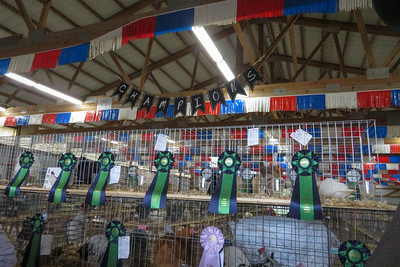 Whiteside County Fair 2019