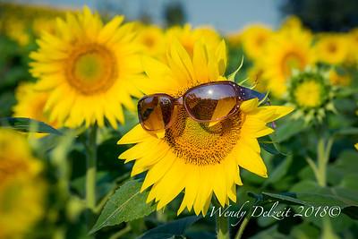 Wendy Delzeit Photography