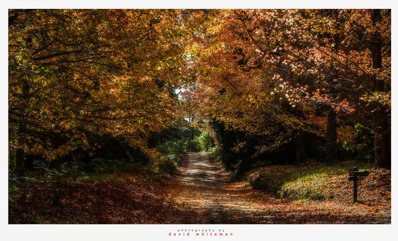 Autumn on Sam's Way
