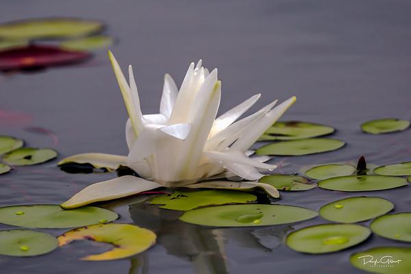 Lake Jackson, Tallahassee, Florida