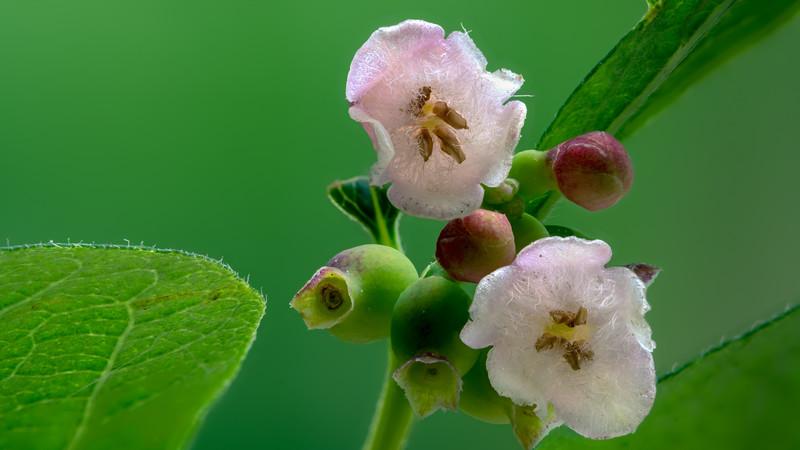 Little Flowers on Shrub.jpg