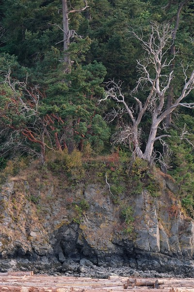Cliff Trees.JPG