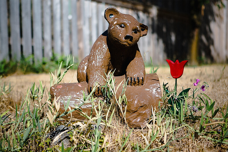 Bear and Red Tulip