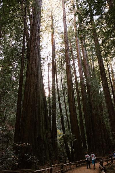 Forest_City_Photographs_Honeymoon_Califonia_San_francisco_Yosimite-41.jpg