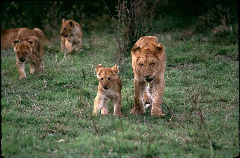 Kenya2_046.jpg