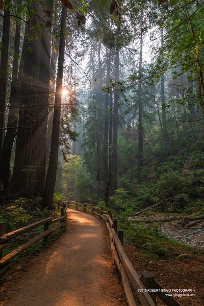 Muir Woods-7119.jpg