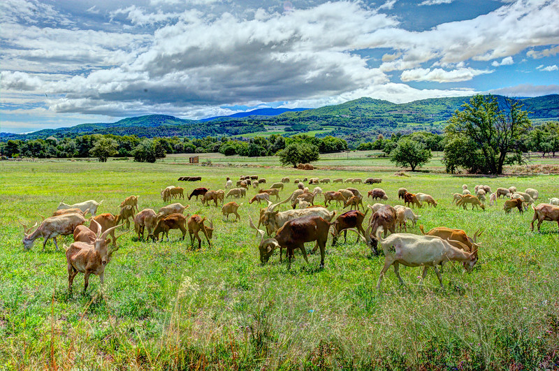 france goats &sheepDSC_2878_79_80_fused.jpg