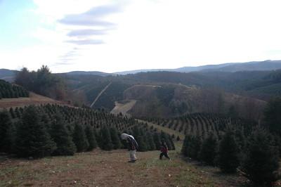 2007-11-23 Christmas Tree