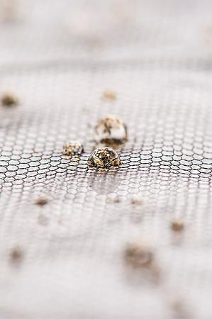 Blandine Brice, ennoblisseur textile