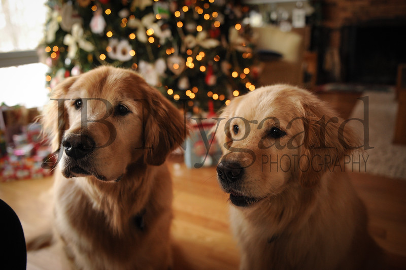 12-29-17 Tom and Marlyn Edwards's dogs - Max and Gracie-1.jpg