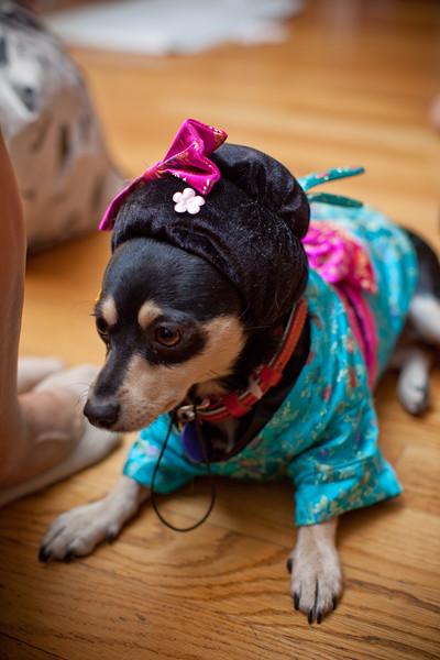 Dog-sushi-halloween2-14.jpg