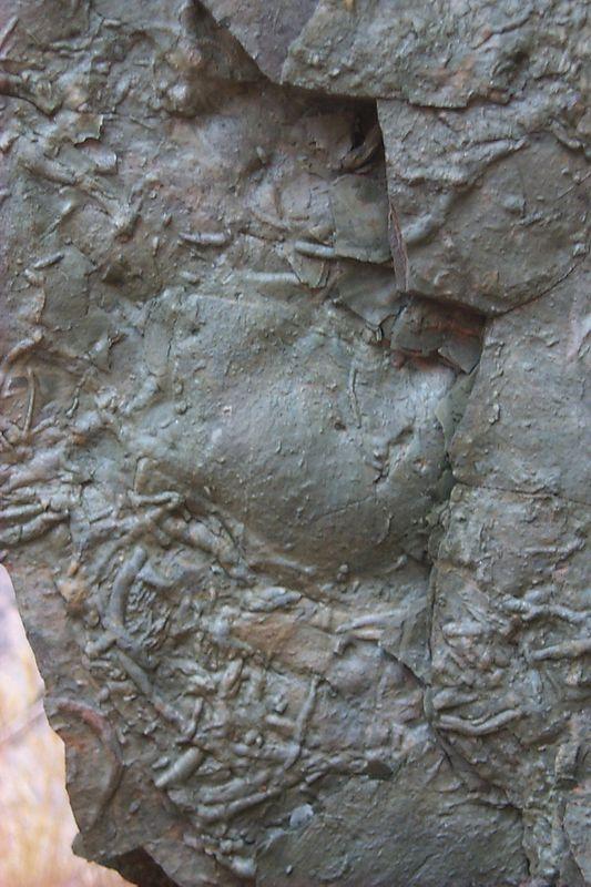 Worm Fossils   (Jun 10, 1999, 11:23am)