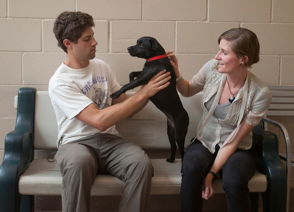 """. Ian Lebov and Kelly Mercer of Santa Cruz play with \""""Lucy\"""", a dog they are thinking of adopting at the San Jose Animal Care Center in San Jose Saturday, July 21, 2013. South Bay\'s animal shelters are overrun and looking for help from the public. All the shelters are working together on an adoption initiative. (Patrick Tehan/Staff)"""