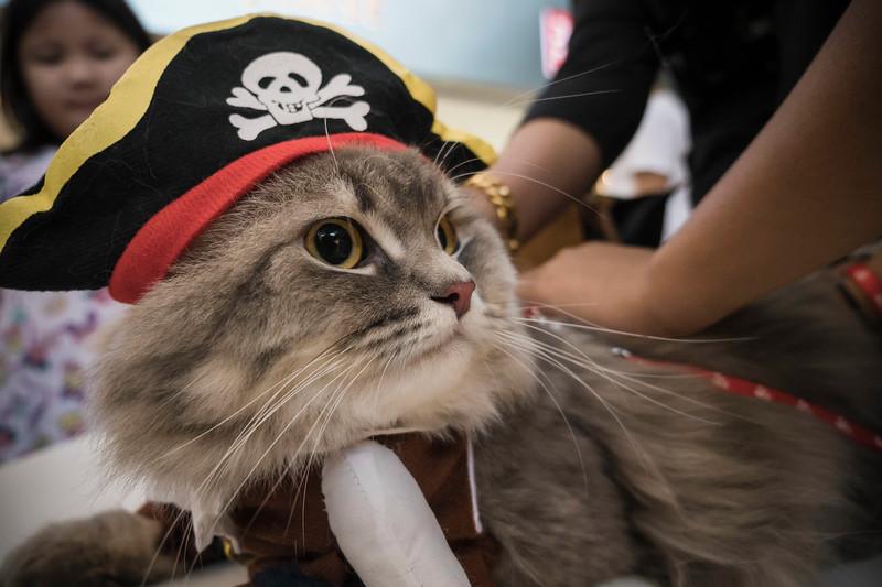 VividSnaps-The-Seletar-Mall-CAT-Dress-Up-Contest-052.jpg