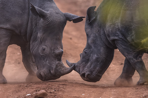 Safari in Meru Rhino Santuary