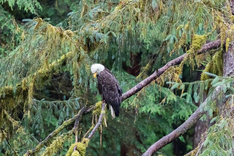Alaska 2015 - Ketchican -  072815-243.jpg