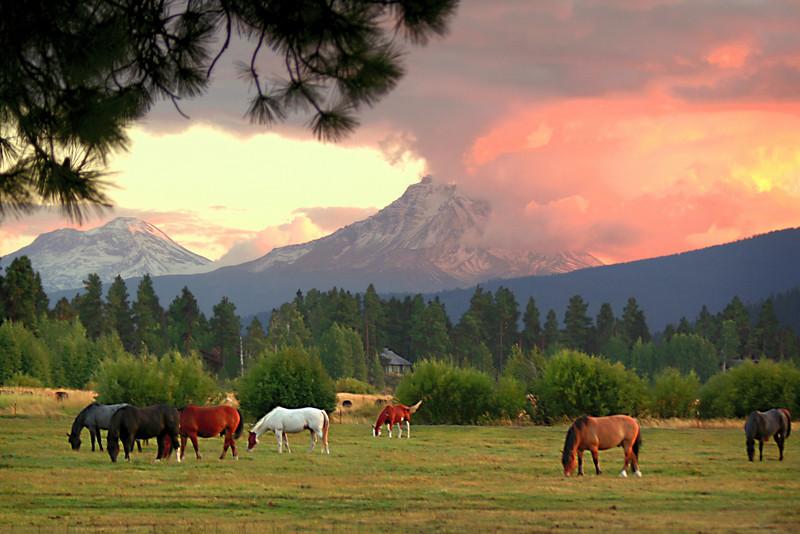 horses sunset 091305MASTER 080306_8313 12x18.jpg