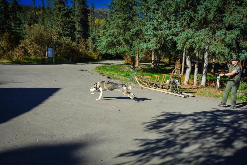 Denali-National-Park-31.jpg