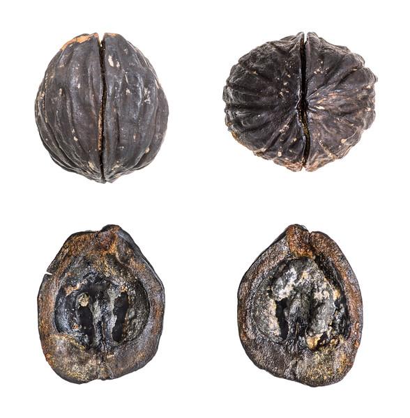 Juglans from Hattiesburg site (Miocene).jpg