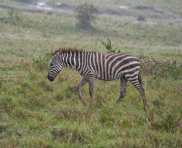 Maasai Mara - Rekero Camp -Kenya